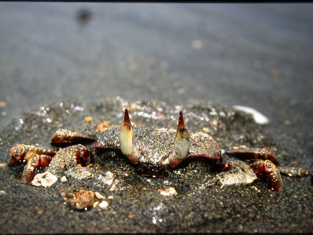 螃蟹的多樣性PDF檔