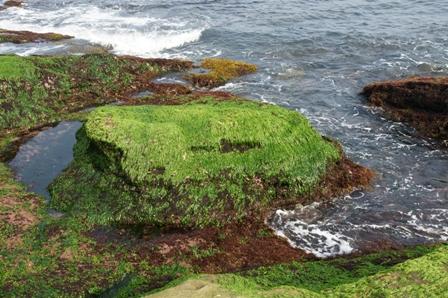 台灣沿岸的海藻PDF檔