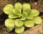 八斗子海濱植物